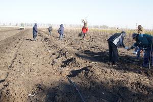 """Питомник на 8 тыс. деревьев заложили в Краснодаре в микрорайоне """"Олимпийский"""""""