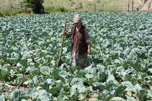 Северный Кавказ получит 12 млрд рублей на развитие сельского хозяйства