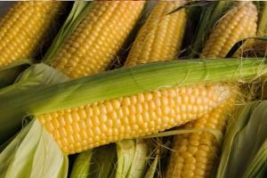 Более 100 млн банок консервированной кукурузы выпустили заводы Кубани