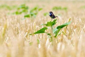 В Крыму обнаружено три вида опасных сорняков