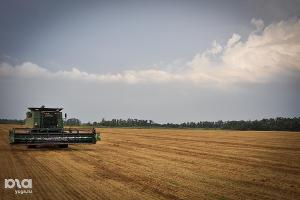 В Чечне в 1,5 раза перевыполнен план по сбору зерна по сравнению с прошлым годом