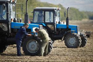 Производство сельскохозяйственной продукции на Дону выросло на 3%