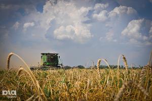 В Тимашевском районе заложили поле оригинальных сортов пшеницы