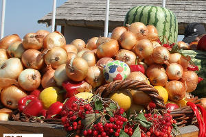 В Крыму из-за плохой погоды перенесли сроки открытия сельскохозяйственной ярмарки