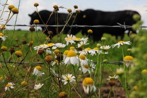 В Краснодаре в 2015 году валовое производство молока ожидают на уровне 14,5 тыс. тонн