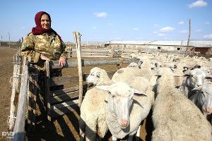 В Дагестане выявлен очаг оспы овец