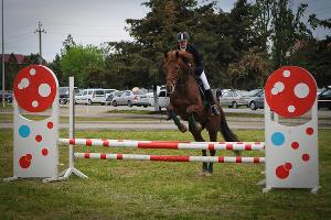 В Северной Осетии хотят восстановить ипподром в Беслане и создать конно-спортивный кластер