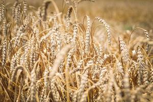 В Адыгее на 8,5% вырос объем производства сельхозпродукции