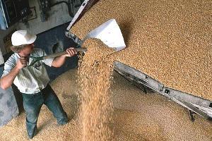 Глава Ставрополья ждет урожай в 10 млн тонн зерна