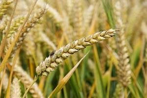 У Крыма появилась возможность экспортировать зерно