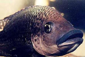 На Кубани разработают стратегию развития рыбной отрасли до 2025 года