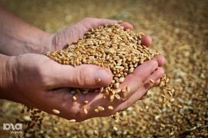 Экспорт зерна через порты Кубани в январе-июле составил почти 7,5 млн тонн