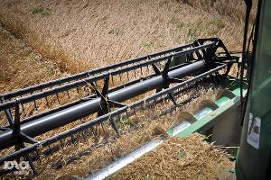Кубанские аграрии завершают уборку риса