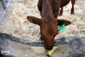 В Майкопе аграрии с помощью господдержки за 10 лет построили 395 теплиц, приобрели 1700 коров и свиней