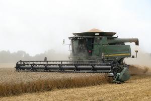 На Дону ожидают собрать 9,7 млн тонн зерновых и 1,42 млн тонн масличных