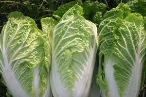 Новый логистический центр по хранению овощей построят в Краснодаре