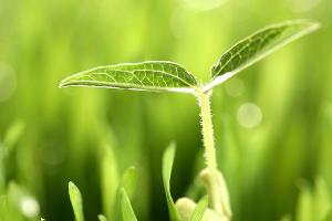 """Компания """"ЕвроХим"""" представила новый для России подход к питанию растений"""