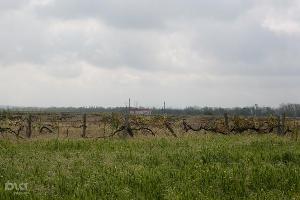 На Ставрополье опубликовали результаты новой кадастровой оценки земель