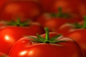 В Гулькевическом районе среди гостей сельхозярмарки разыграют живого барана и помидоры