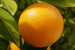 На Кубани в марте значительнее всего подорожали апельсины, виноград и косметика
