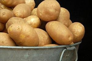 На Ставрополье в 2015 году собрали 407 тысяч тонн картофеля