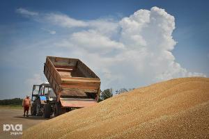 В Адыгее с рекордной урожайностью завершается уборка озимых