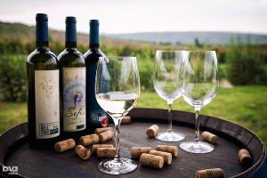Центр винного туризма предлагают создать в Новороссийске