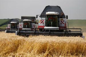 В Тимашевском районе зерно обмолотили на 64% сельхозугодий