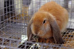 Первую в Брюховецком районе кроличью ферму откроют в 2017 году