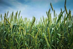 Дагестанское УФАС аннулировало масштабный тендер Мингосимущества на инвентаризацию сельхозугодий