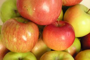В Адыгее ожидают рекордный урожай яблок