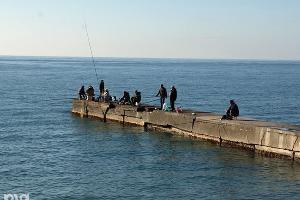 На развитие рыбохозяйственной отрасли Крыма выделили 200 млн рублей
