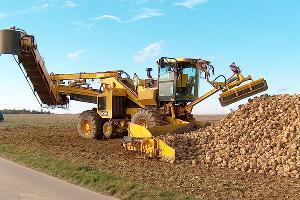 В Гулькевичском районе уборку сахарной свеклы завершили на 42%