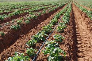 Агузаров планирует поднять экономику Северной Осетии за счет развития сельского хозяйства