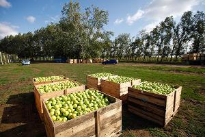 На Дону в 2016 году планируют заложить 250 га садов