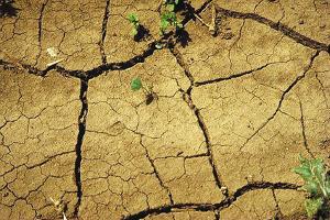 В Ингушетии ущерб от засухи составил 420 млн рублей