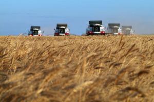 В Ростовской области убрали 8,5 млн тонн зерновых и зернобобовых