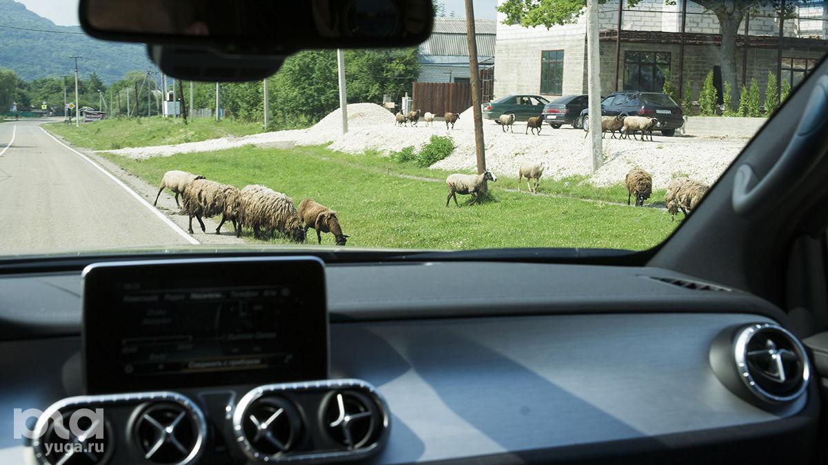 Местные достопримечательности. Будьте осторожны в пути ©Фото Евгения Мельченко, Юга.ру