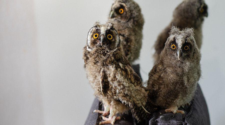 """©Фото из группы «""""Рио"""" — Помощь диким птицам Краснодар», vk.com/riokrasnodar23"""