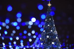 Новогодняя елка в Краснодаре ©Фото Елены Синеок, Юга.ру