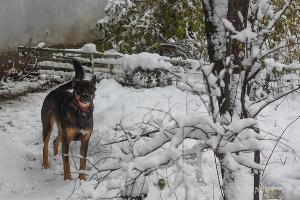 Снег в Краснодаре ©Фото Елены Синеок, Юга.ру