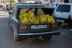 Сезон ввоза мимозы из Абхазии в Сочи ©Нина Зотина, ЮГА.ру