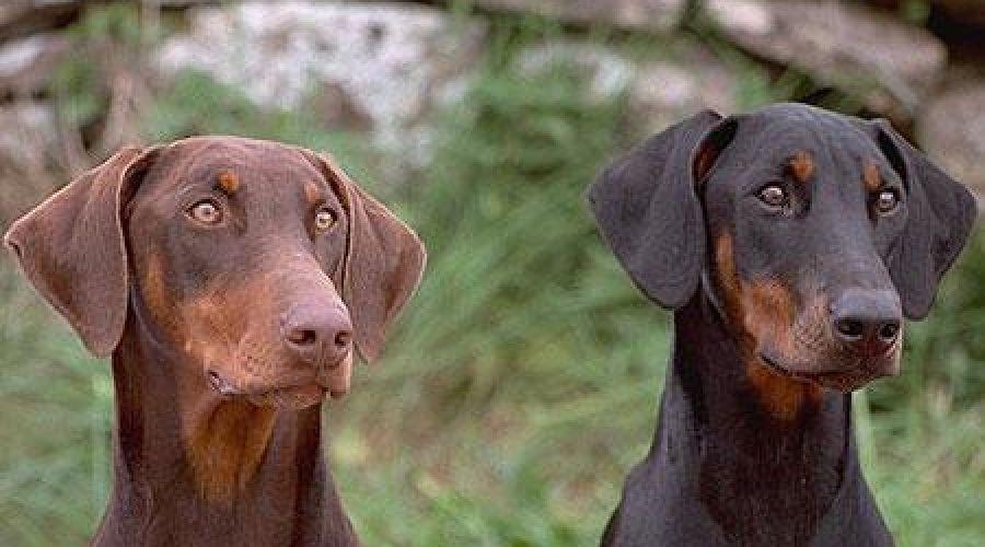 Собаки ©Фото Юга.ру
