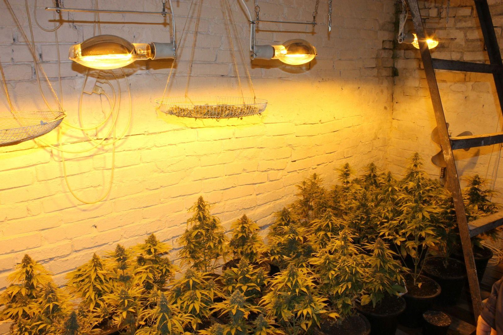 Выращивание конопли в гараже чем курить марихуану