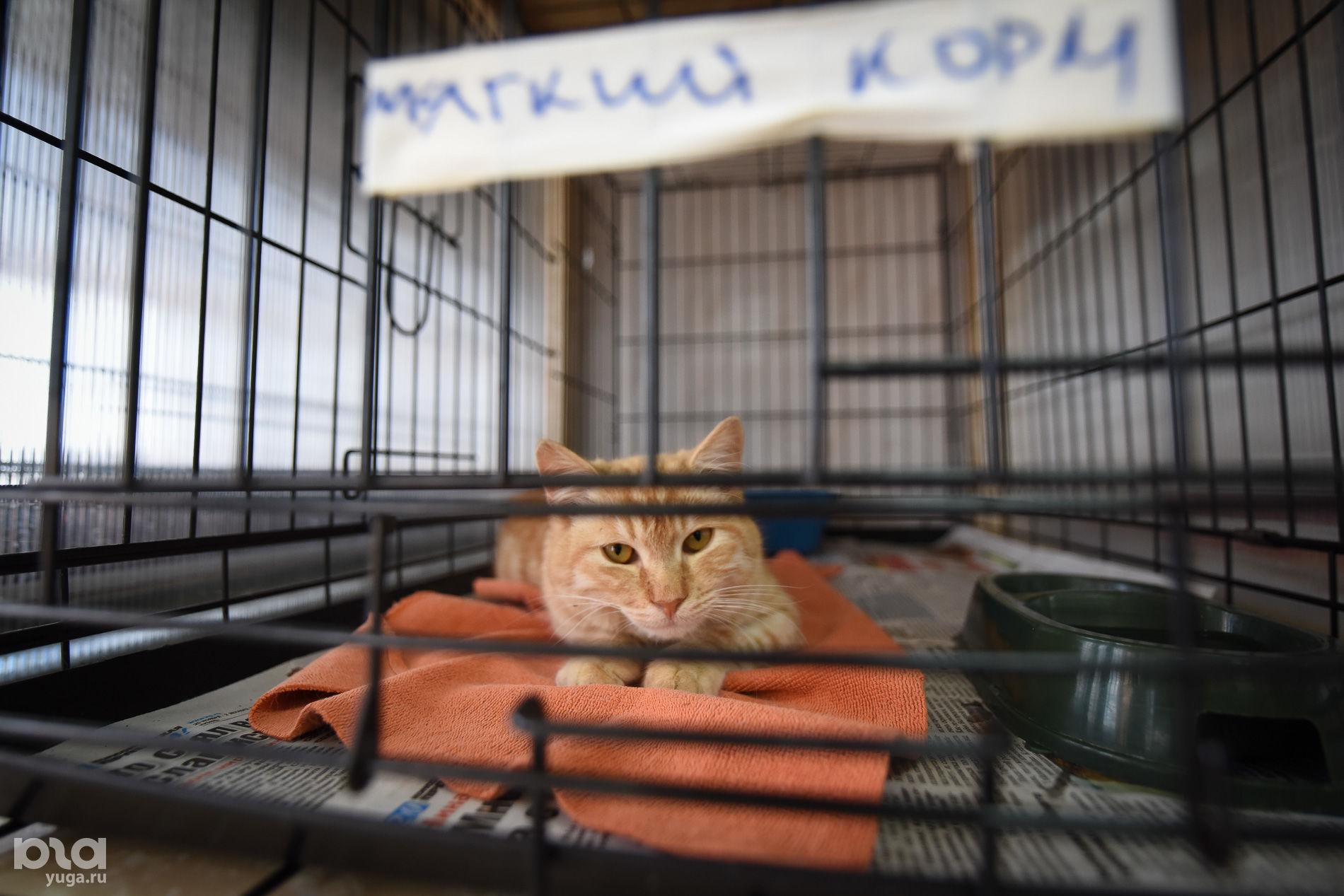 приюты для животных в краснодаре с фото понимаем вентвортом друг