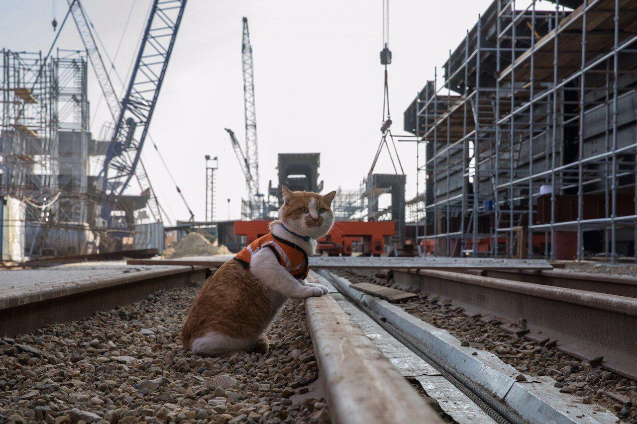 Строители пустят кота пройти поКрымскому мосту