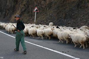 Строительство дорог в Северной Осетии  ©Фото Юга.ру