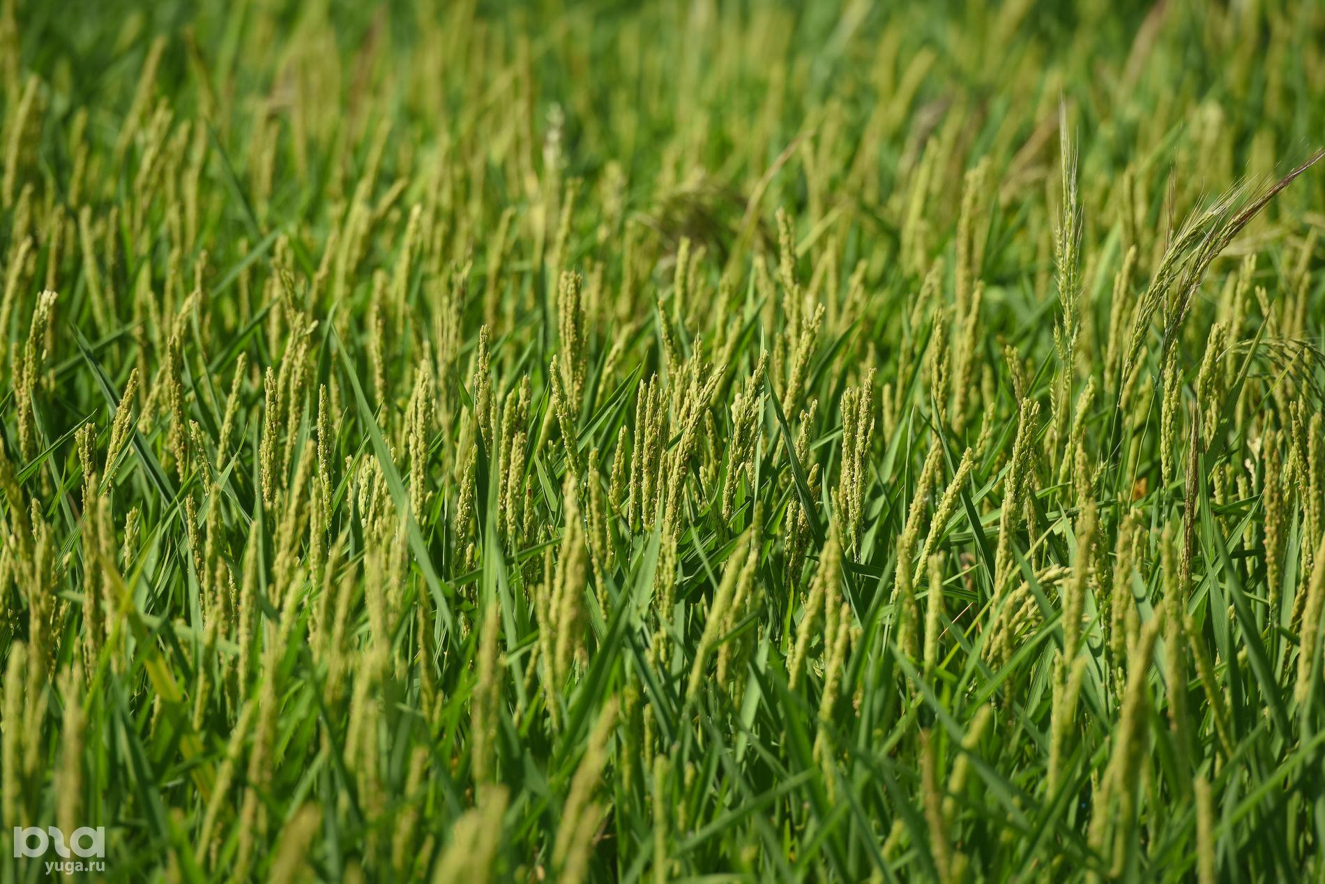 День поля в Адыгее ©Фото Елены Синеок, Юга.ру