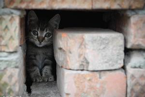 Осенние котики ©Фото Юга.ру