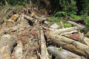 Незаконная вырубка леса в Карачаево-Черкесии ©Фото предоставлено пресс-службой WWF